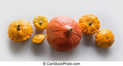 Banner of fresh orange pumpkin and pattypan squash on grey background with copy space. Top view. Flat lay Template for your design.
