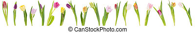 Banner of tulips - colorful banner of different tulips...