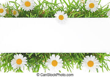 Banner on grass and white flowers background