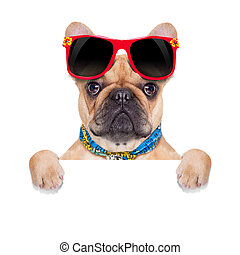 fawn french bulldog behind a white blank banner or placard, on holidays, isolated on white background