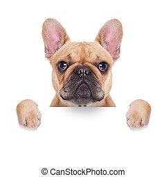 banner placard dog - fawn french bulldog behind a white...