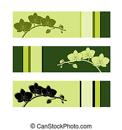 banner, satz, drei, orchidee