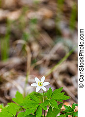 Banner white spring forest flower