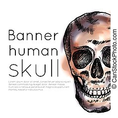 Banner with drawing of human skull with hatching, watercolor...