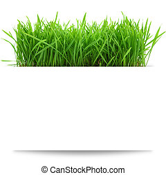Banner with fresh grass isolated on white background