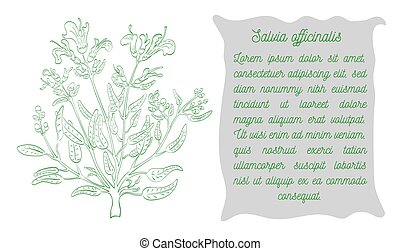 Banner with Green Color Contoured Garden Sage - Banner with ...