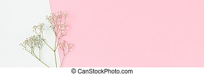 Banner with gypsophila flowers on a colorful background.