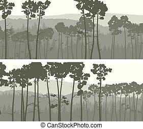 Banners of coniferous pinewood.