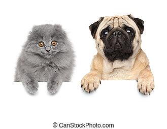bannière, chien, au-dessus, chat