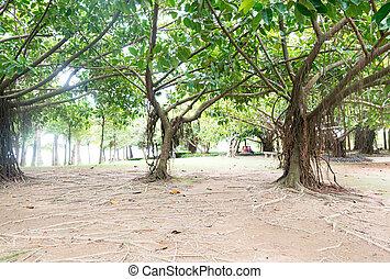 banyan fa, alatt, egy, tropikus, liget