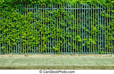rail fence - Banyan on rail fence