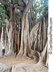 Banyan - Tree-forest of fairy tales and fantasy movies ...
