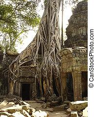 Banyan tree growing through ruins, Angkor Wat, Cambodia