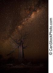 Baobab Gallaxy