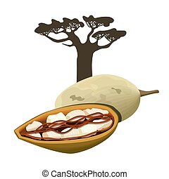 baobab kopyto, a, ovoce, zámotek, osamocený, object., adansonia., superfood, baobab, fruit., vektor, illustration.