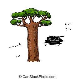 baobab kopyto, vektor, drawing., osamocený, rukopis, nahý, botanický, illus