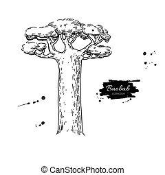 baobab kopyto, vektor, drawing., osamocený, rukopis, nahý, botanický