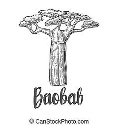 baobab, kopyto., vektor, vinobraní, vyřezávat, ilustrace, oproti neposkvrněný, grafické pozadí.
