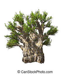 Baobab tree isolated. Vector illustration