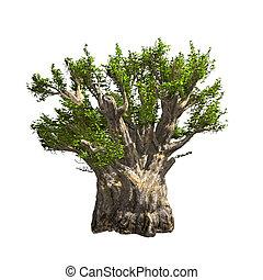 Baobab tree isolated. Vector illustration
