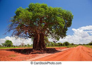 Baobab tree on red soil road. Landscape of Kenya, Africa