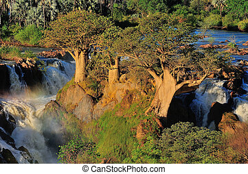 Baobabs at Epupa waterfall, Namibia