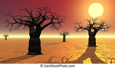 Baobabs by sunset - Baobabs with shadows in the desert by...