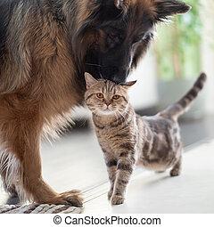 barátság, együtt, macska, kutya, között, pets., indoors.