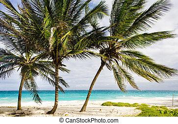 Barbados, Caribbean - Bottom Bay, Barbados, Caribbean