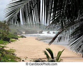 barbados, pláž