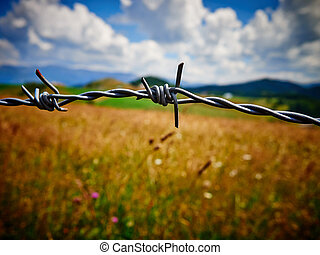 Barbed or barb wire