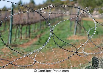 Barbed tape or razor wire fence outdoor