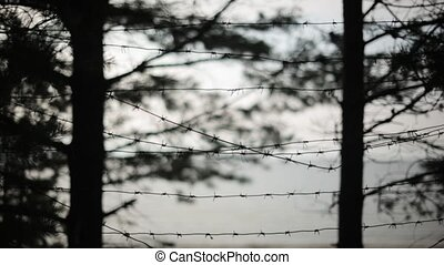 Barbed wire fence. Silhouettes of trees on background. Summer evening. Jail