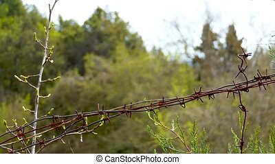 Barbed wire in the forest - Rusty, barbed wire on a blurry...