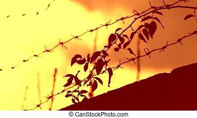 barbed wire prison sunset swinging tree branch orange...