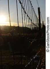 Barbed wires and sun