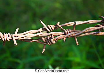 barbed wires