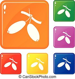 Barberry icons set vector color