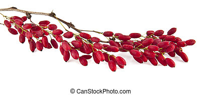 barberry on a white background