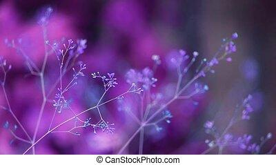 barbouillage, mauvaise herbe, fond, temps, graine, pourpre, lumière, crépuscule