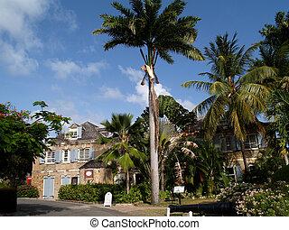 barbuda, hafen, antigua, englisches
