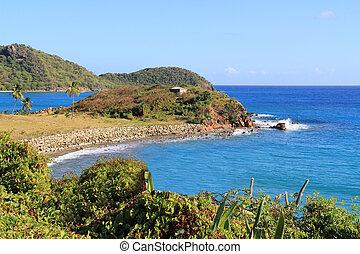 barbuda, kusten, antigua