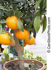 Barcelona Food - Orange Tree