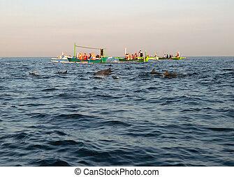 barche, pescatore, delfini