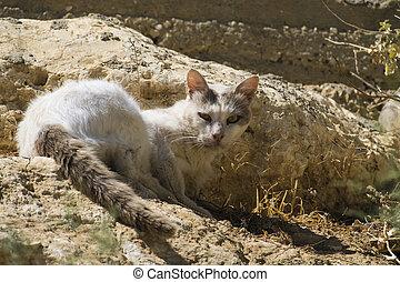 Niebezpieczeństwo Bardzo Kot Lucyfer Sensed Troskliwy Chytrość