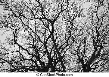 Bare Branches 1 - A black-and-white pattern of intertwined...