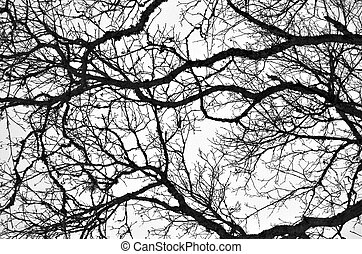Bare Branches 2 - A black-and-white pattern of intertwined...