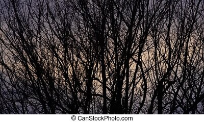 Bare branches detail at sunset moved by wind