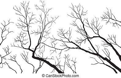Black and White Bare Tree Branches