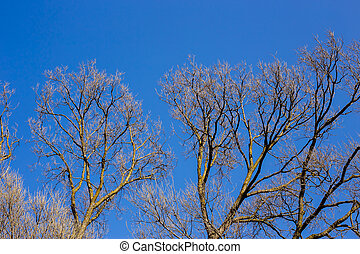 Bare branches of a tree against blue sky, nature spring background